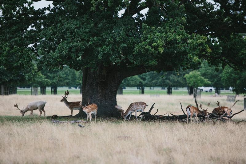 London wedding photography, wildlife